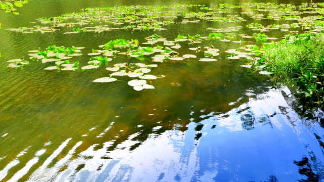 Pond Water Gentle Ripple Reflection, Lake Blue Nature Elements video