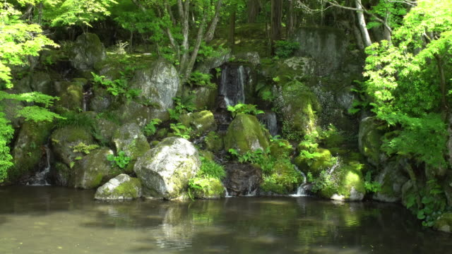 pond with a small cascade among rocks and ferns
