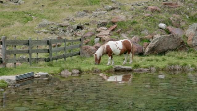 Pony Brown White Mountain Lake - video