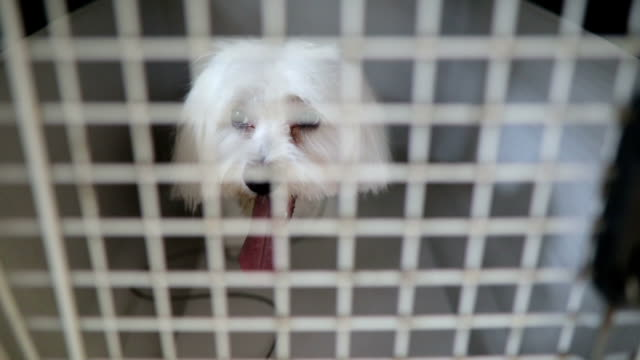 A poor white dog in his tiny metal cage video