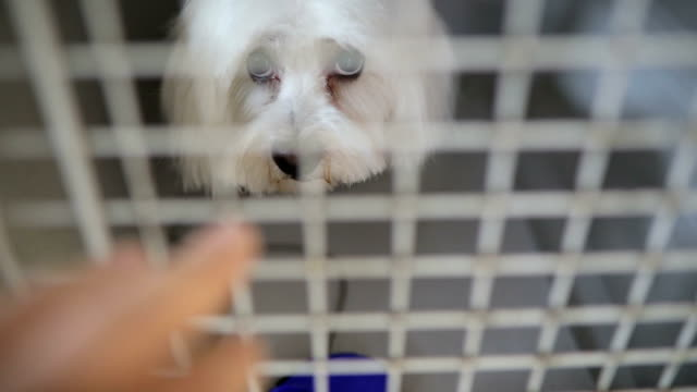 A poor white dog in his tiny metal cage