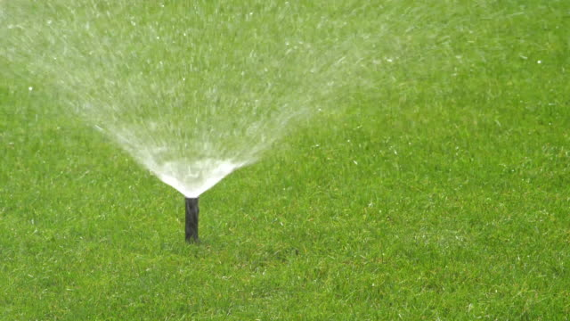Pop-up sprinkler head emerging and watering a lush green lawn then retracting.