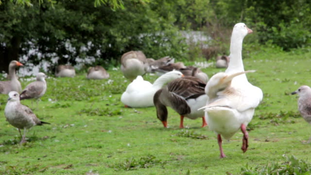 porto parque da cidade duck video