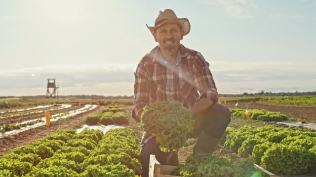 SLO MO Portrait of a farmer showing a lettuce to the camera while working on a field