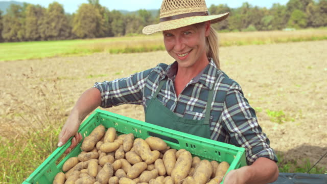 Portrait of a female farmer taking potatoes out of the delivery truck video