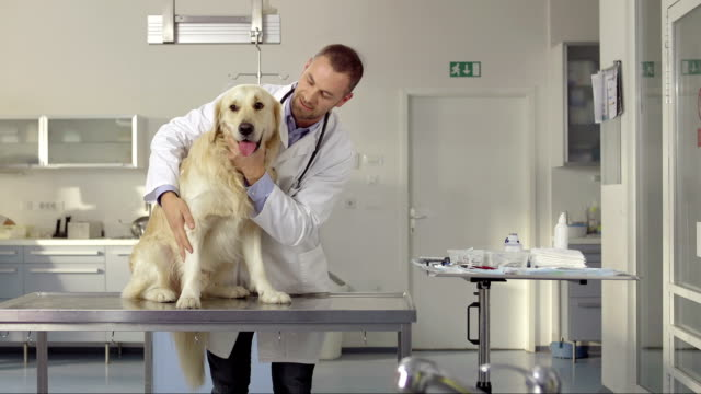 Portrait Of A Friendly Veterinarian video