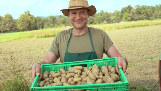 portrait of a happy farmer taking potatoes out of the delivery truck - patate video stock e b–roll