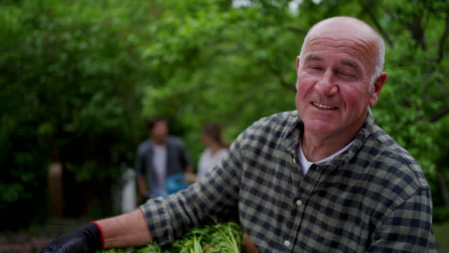 Portrait of a happy senior farmer Positive senior farmer is holding a box with freshly picked carrots homegrown produce stock videos & royalty-free footage