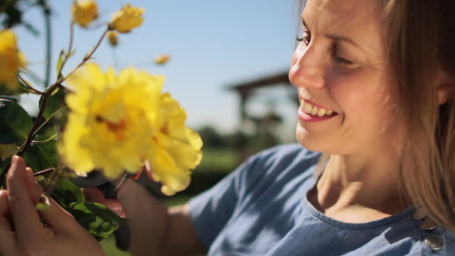 portrait of a lovely young woman in the garden on a sunny day. girl cuts a bush with yellow roses. woman with secateurs works in the garden - orticoltura video stock e b–roll