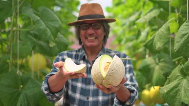 Portrait of a smiling male farmer giving the fresh cantaloupe towards the camera