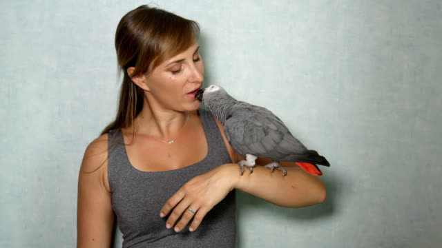 CLOSE UP: Portrait of African grey parrot sitting on girl's hand and kissing her - video
