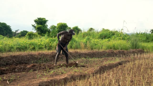 マラウイのアフリカ農村農民の肖像 ビデオ