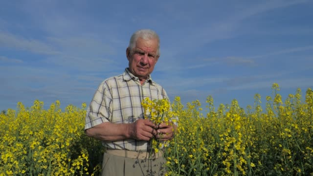 Portrait of an elderly farmer stands in a blooming field of yellow flowers. video