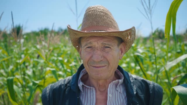 portrait of an elderly man in a straw hat against the background of a cornfield. a farmer on his land surrounded by green stems of grain crops - farmer video stock e b–roll