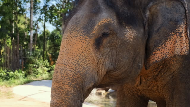 portrait of an magnificent old asian elephant - {{relatedsearchurl(carousel.phrase)}} video stock e b–roll