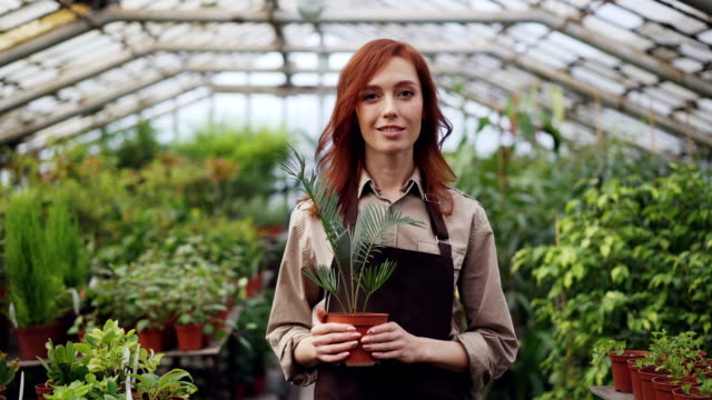 Portrait of attractive red-haired woman gardener in apron standing inside large greenhouse and holding pot plant. Orcharding, people and growing flowers concept.