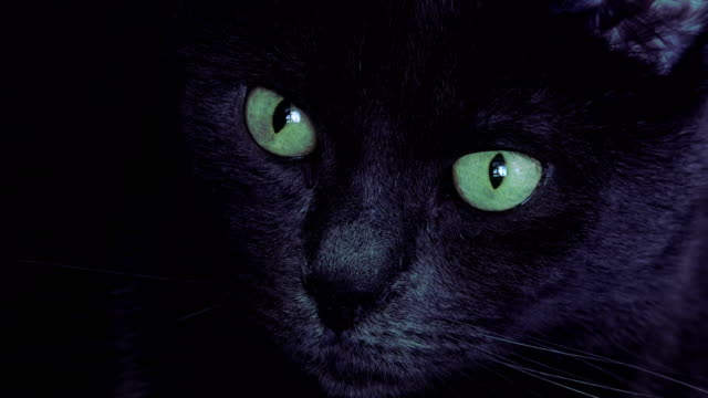 portrait of black cat with green eyes - pelo animale video stock e b–roll