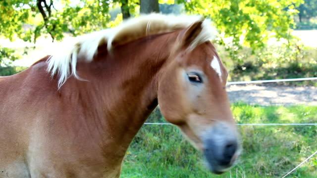 stockvideo's en b-roll-footage met portret van bruin paard schud met het hoofd - s
