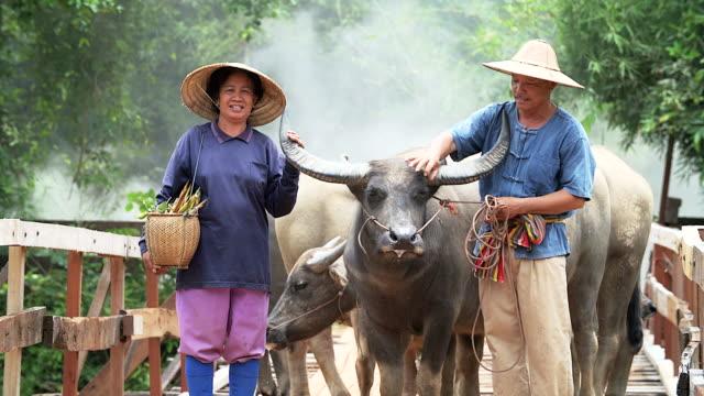 stockvideo's en b-roll-footage met 4k: portret van paar boer tegenover hun buffels op platteland. - vrouwtjesdier