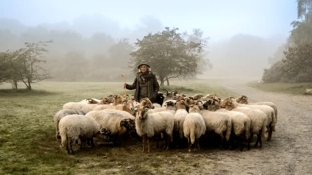 portrait of female shepherd and flock of sheep at a foggy sunrise in the woods - mandriano video stock e b–roll