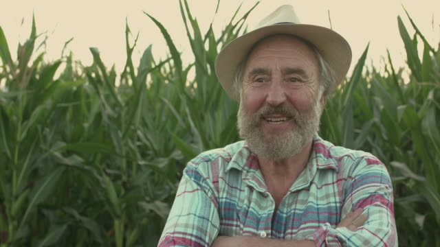 Portrait of happy senior farmer crossing hands and rejoices at camera in field Portrait of happy senior farmer crossing hands and rejoices at camera in corn field. Slowly in FullHD agricultural occupation stock videos & royalty-free footage