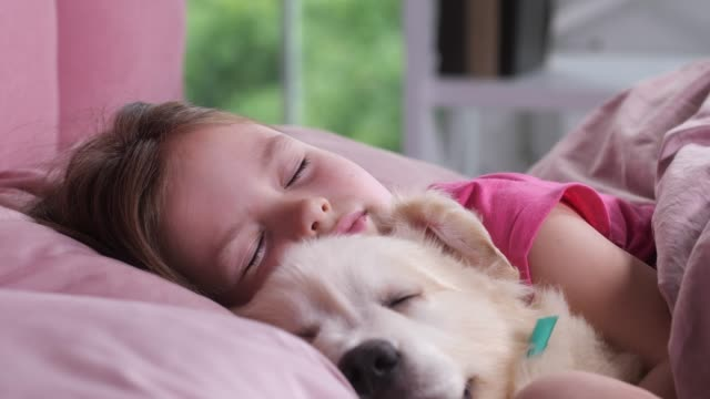 portrait of little girl sleeping with puppy in bed - bambino cane video stock e b–roll