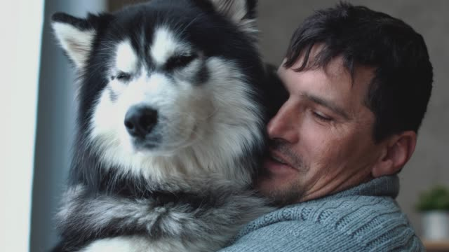 portrait of man holding husky on hands looking out the window, thinking his thoughts and dreaming - fedeltà video stock e b–roll
