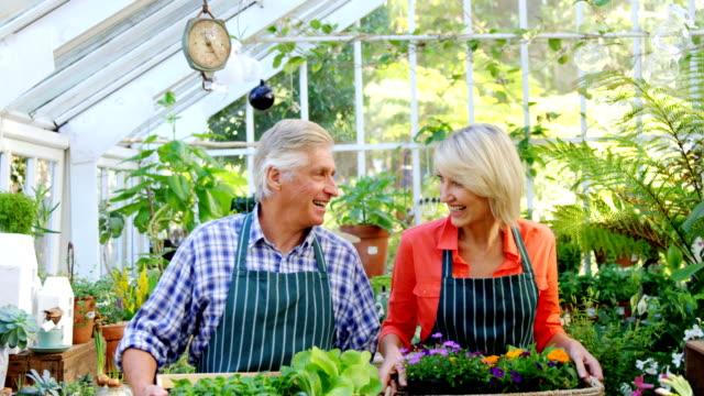 portrait of mature couple holding pot plant - 50 54 lata filmów i materiałów b-roll