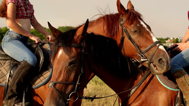 Portrait of two horses in the nature near the lake video