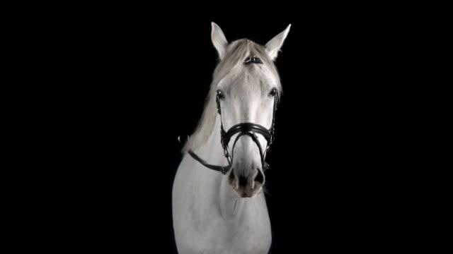 slo mo porträtt av vit häst tittar in i kameran - häst bildbanksvideor och videomaterial från bakom kulisserna