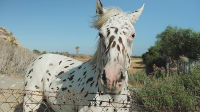 portrait of white horse - grzywa filmów i materiałów b-roll