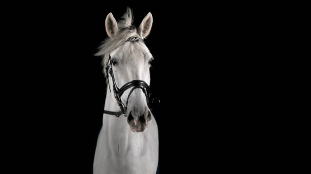 slo mo portrait of white horse - criniera video stock e b–roll