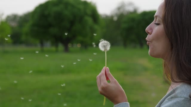 Portrait of woman blow on dandelion, slow motion Portrait of woman blowing on soft dandelion. Beautiful girl blow on dandelion flower head, small florets from seed head slowly fly in air dandelion stock videos & royalty-free footage