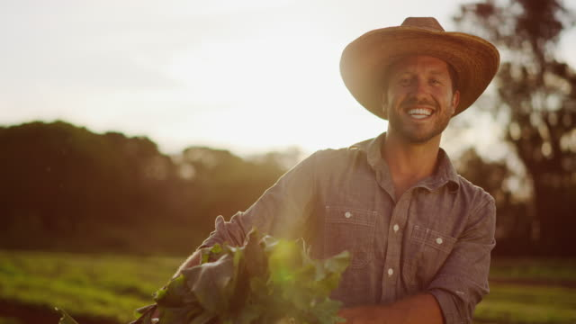 Portrait of young farmer holding his harvest at sunset video