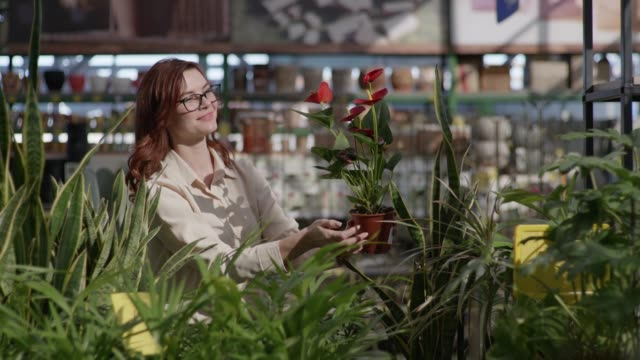 portrait smiling woman buyer in glasses for sight chooses decorative plant creating comfort in your apartment in flower store background of green home plants, concept of decor and design - direttrice video stock e b–roll