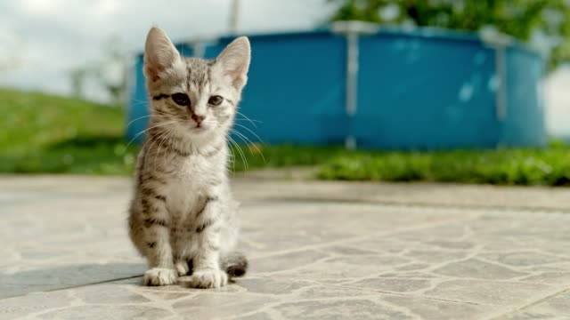 MS Portrait striped kitten sitting on sunny patio