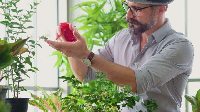 Portrait young man with a beard in positive emotion with hobby growing and use fogger to spray water on organic ornamental plants relax in greenhouses,free time activities.Concept of people, Lifestyle
