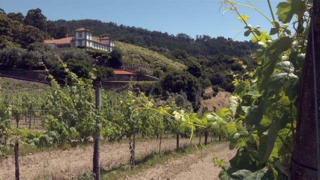 portuguese vineyards - ponte de lima - paço de calheiros - azienda vinicola video stock e b–roll
