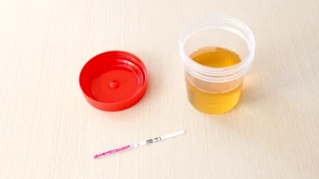 Positiven Schwangerschaftstest Ergebnis mit zwei Streifen auf dem Tisch. Neben der Urin kann. – Video