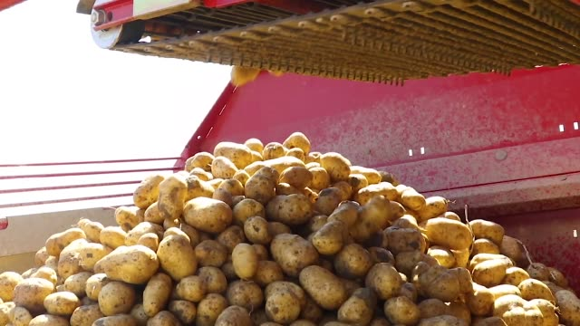potatoes dropped by a industrial machine in a factory potatoes dropped by a industrial machine in a factory side lit stock videos & royalty-free footage