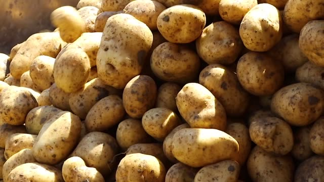 potatoes quality control system in a factory potatoes quality control system in a factory side lit stock videos & royalty-free footage