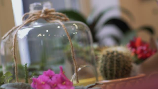 vidéos et rushes de fleurs en pot debout sur la table. petit cactus et fleurs maison dans des pots de plus en plus. le focus se déplace de l'avant-plan à l'arrière-plan. - composition florale