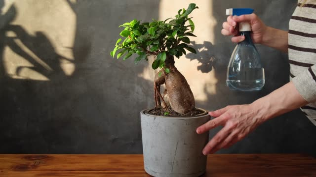 Potted plant care concept.