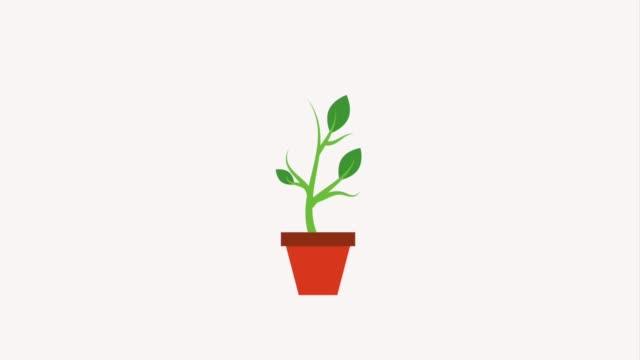 potted plant dollar coins growth finance potted plant dollar coins growth finance animation hd growth icon stock videos & royalty-free footage