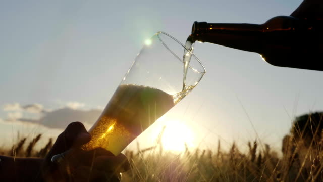 Pour the beer into the glass from the bottle. On a wheat field at sunset. Slow motion video video