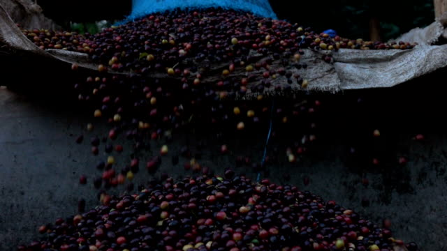 pouring coffee bean slow motion - coffee farmer video stock e b–roll