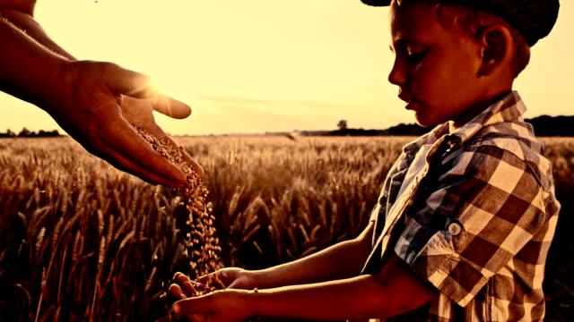 SLO MO Pouring corn maize into boy's hand video