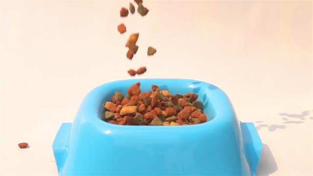 vídeos de stock e filmes b-roll de pouring dry kibble dog food into the blue plastic bowl on white background - dog food