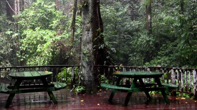 Pouring rain in the jungle