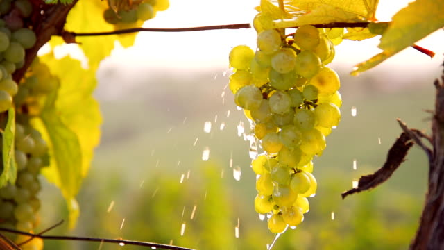 HD SUPER SLOW-MO: Pouring Water Over The Grapes video